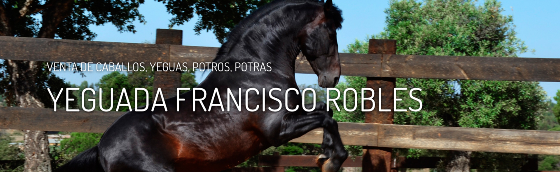 Venta de caballos de pura raza española