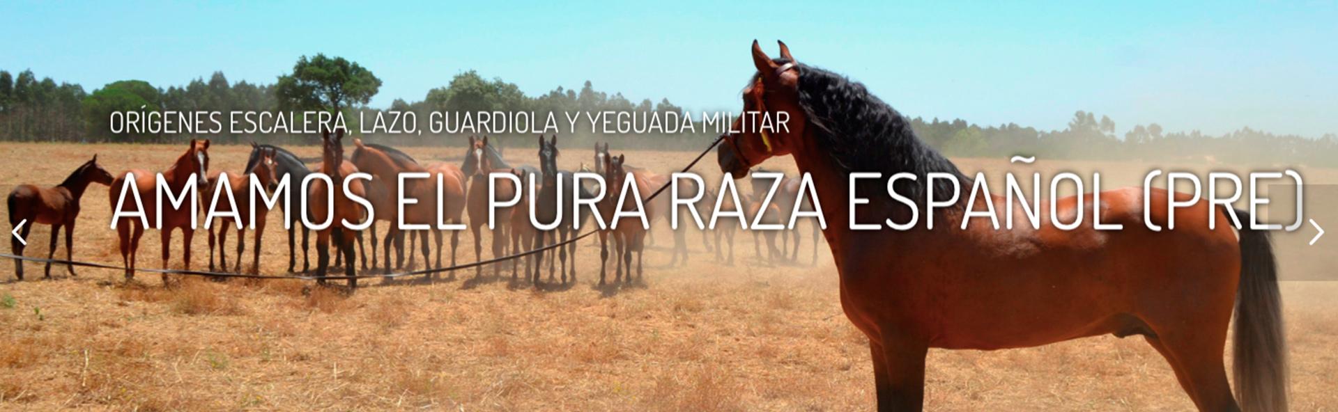 Caballos de Pura Raza Española